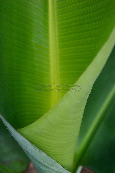 Banana Leaf Funnel Shape