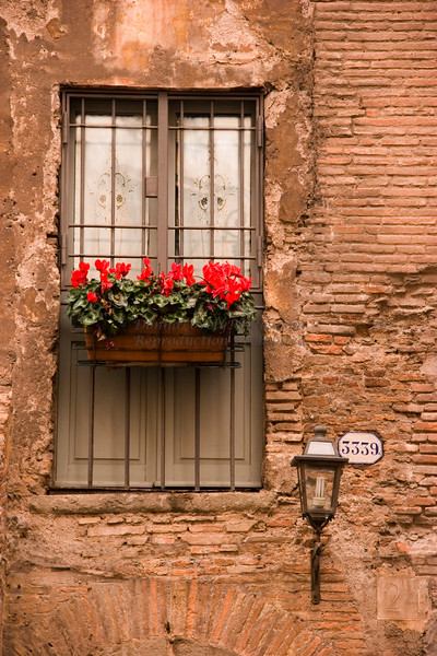Red Cyclamen Flowers in Roman Window #3339
