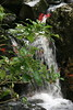 Cigar Flowers and La Mina Falls, Puerto Rico