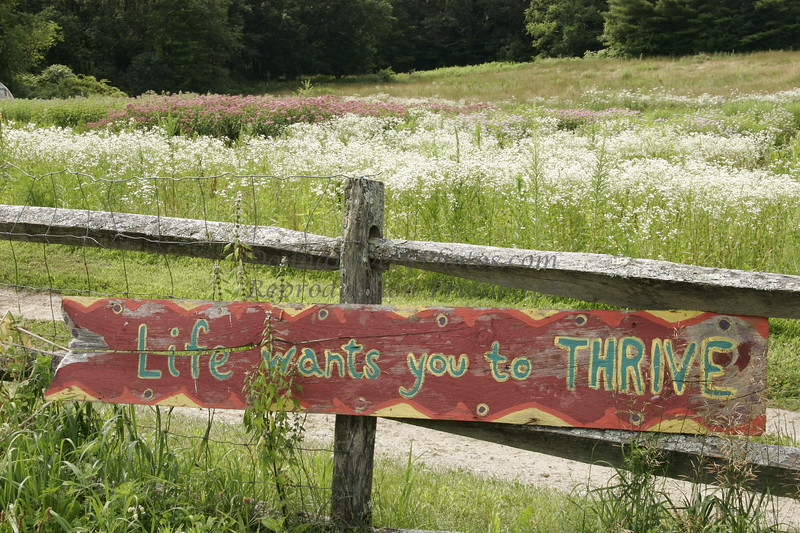 Life Wants You to Thrive, Berkshires, MA