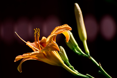 flowers-5647