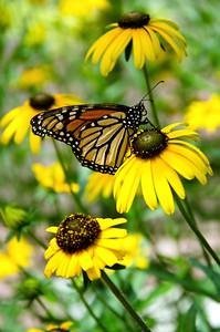 butterfly-93