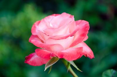 flowers2-21