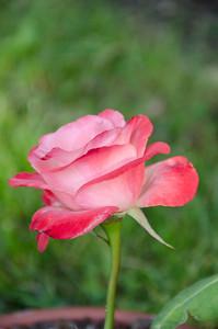 flowers2-11