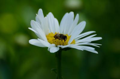 flowers-5624