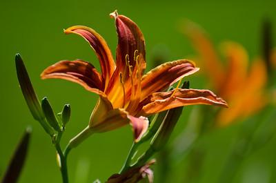 flowers-5630