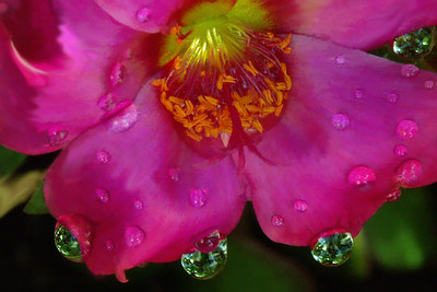 Pursalane and  Waterdrops