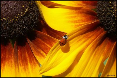 Ladybug Fly Away Home
