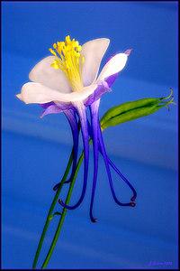 Kim's Flower