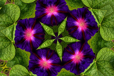 Morning Glory Kaleidoscope