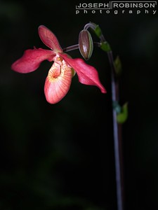 Orchid at the National Botanical Gardens