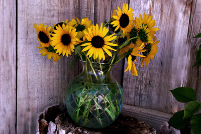 Sunflowers in a Vase #1