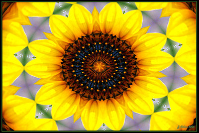 Sunflower Kaleidoscope