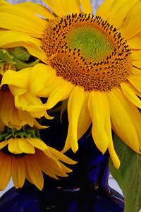 Diane's Sunflowers