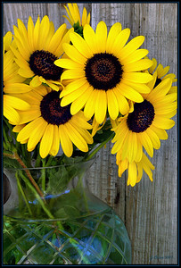 Sunflowers in Aqua Vase