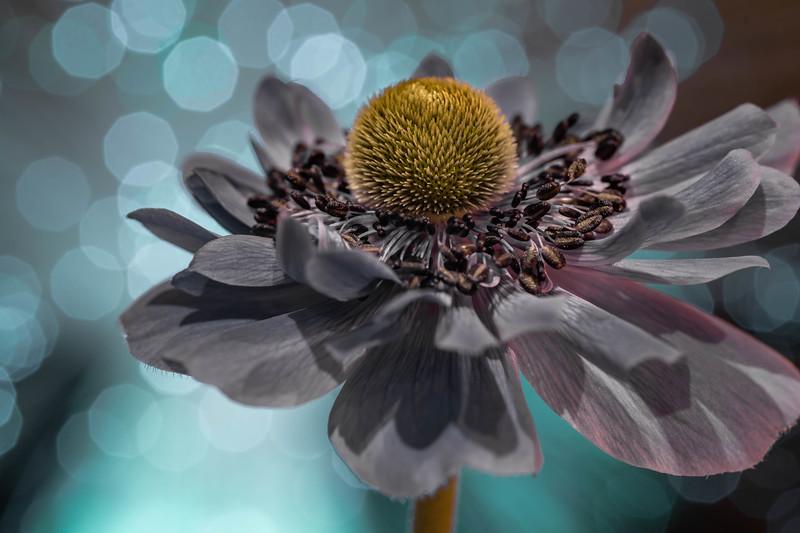 Bokeh Bloom #2