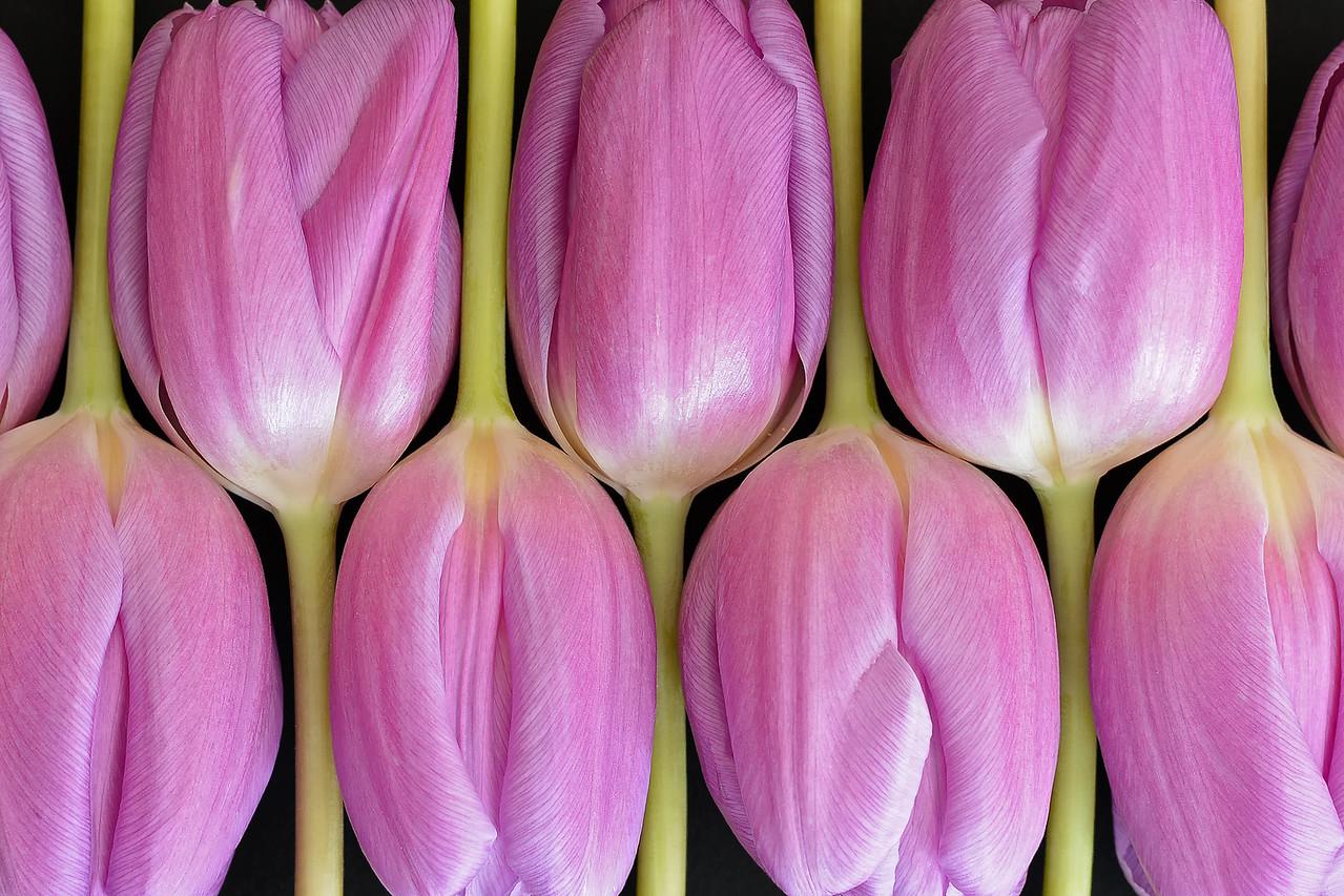 Arranged Tulips