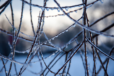 Thin Icy Branches