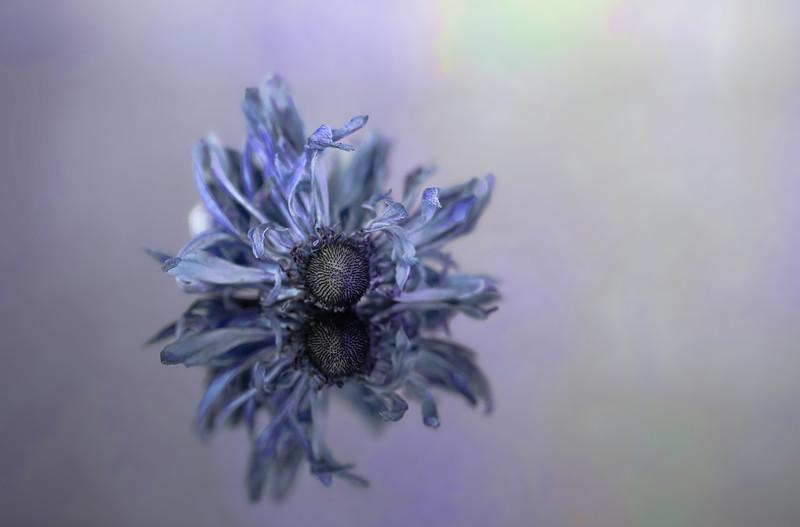 Mirrored Blues