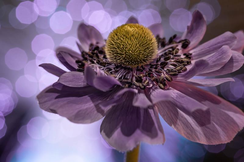 Bokeh Bloom #4