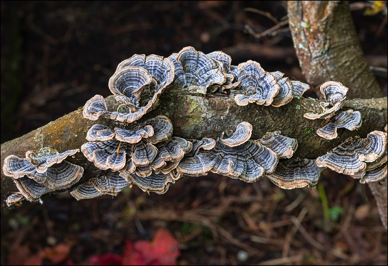 Forest Floor Lichen on a Branch