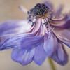 Floral Dance #1