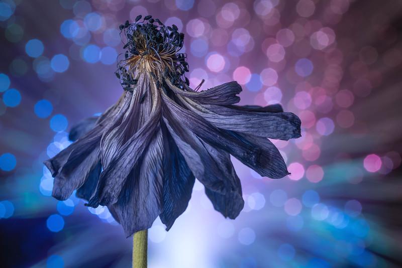 Disco Bloom Blue