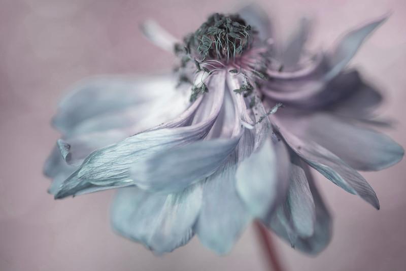 Floral Dance #4