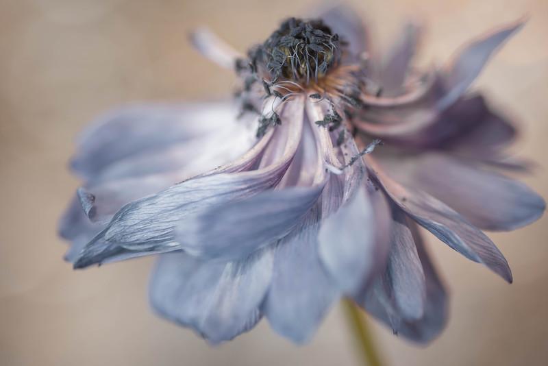 Floral Dance #3
