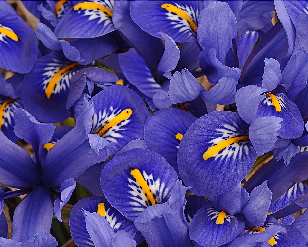 Blue Iris Group