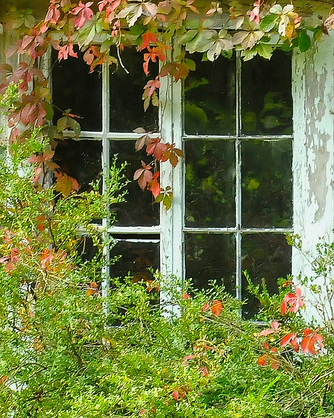 Window at Fernwood