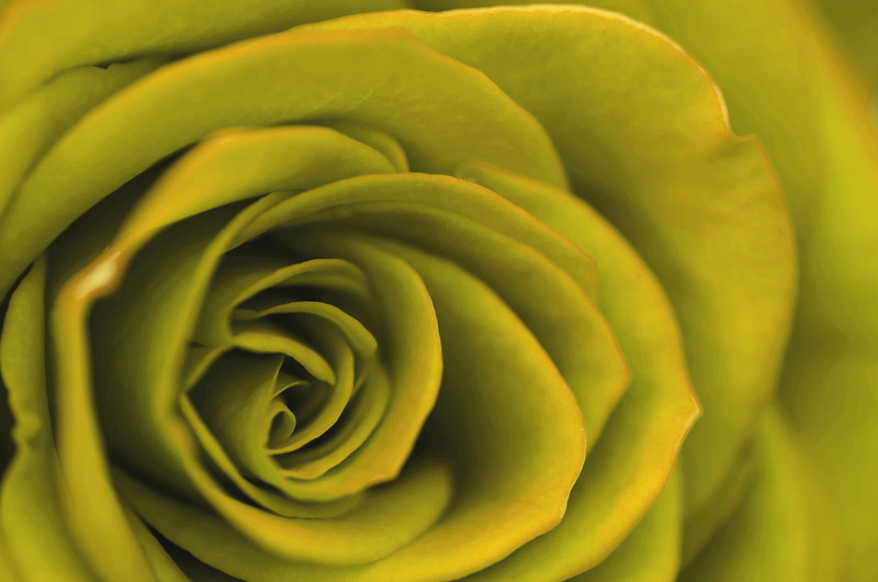 Lemon Petals