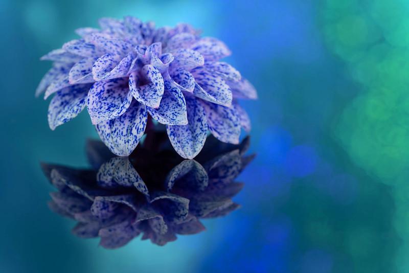 Blue Freckles