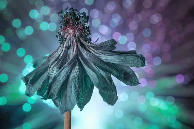 Disco Bloom Green