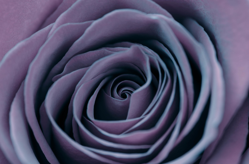Faded Heart (Lilac)