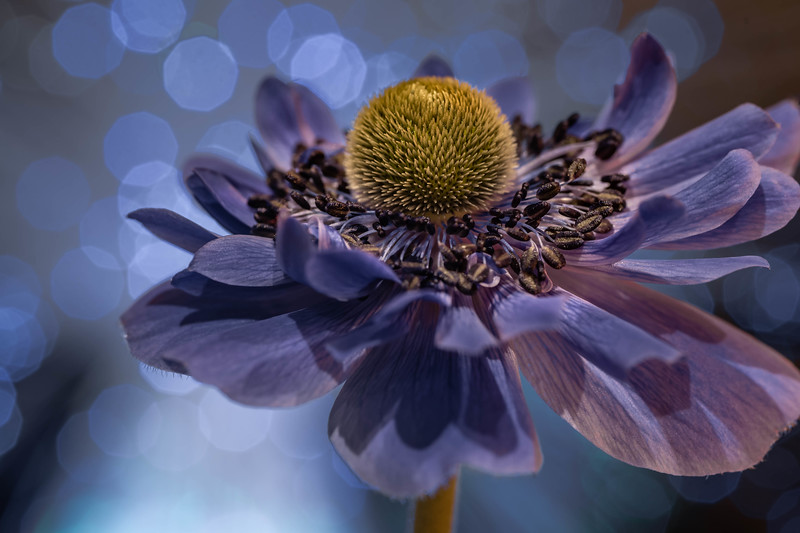 Bokeh Bloom #3