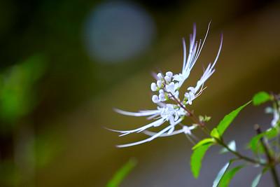 Plante-médecine