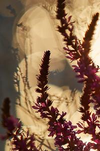 Au bord des fleurs