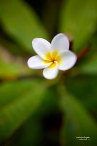 Fleur de Guadeloupe