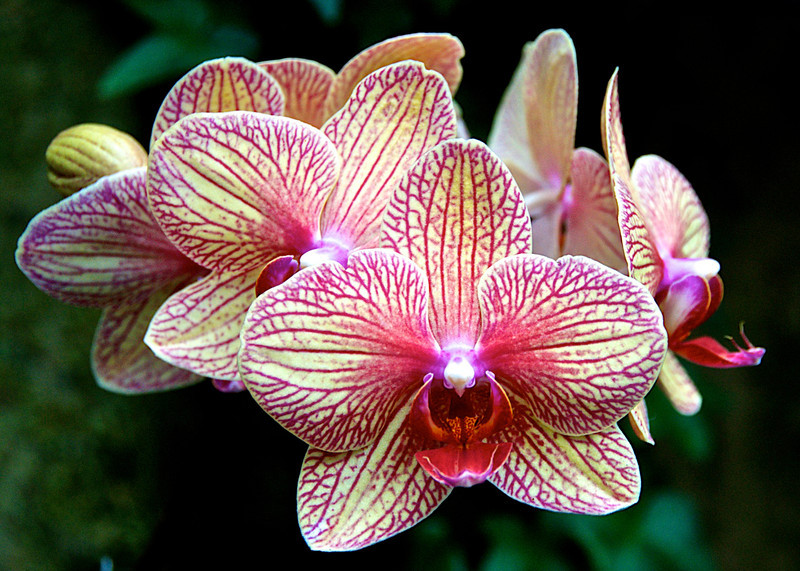 The Meaning of Orchids