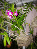 130109-orchids-0005