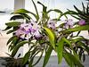 130109-orchids-0003