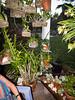 130109-orchids-0013