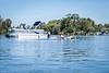 20200312-Crystal_River_Kayaking-008