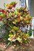 120320-flora-0022