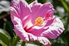 120320-flora-0032