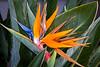 120320-flora-0003