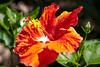 120320-flora-0024