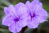 120320-flora-0028