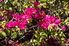 120320-flora-0021